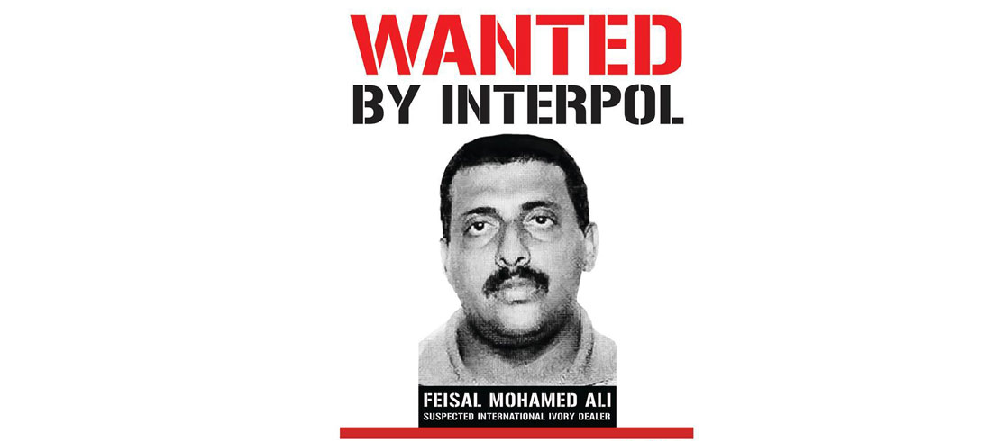 Kenya: Interpol Issues Arrest Warrant for Suspected Ivory Smuggler Feisal Ali