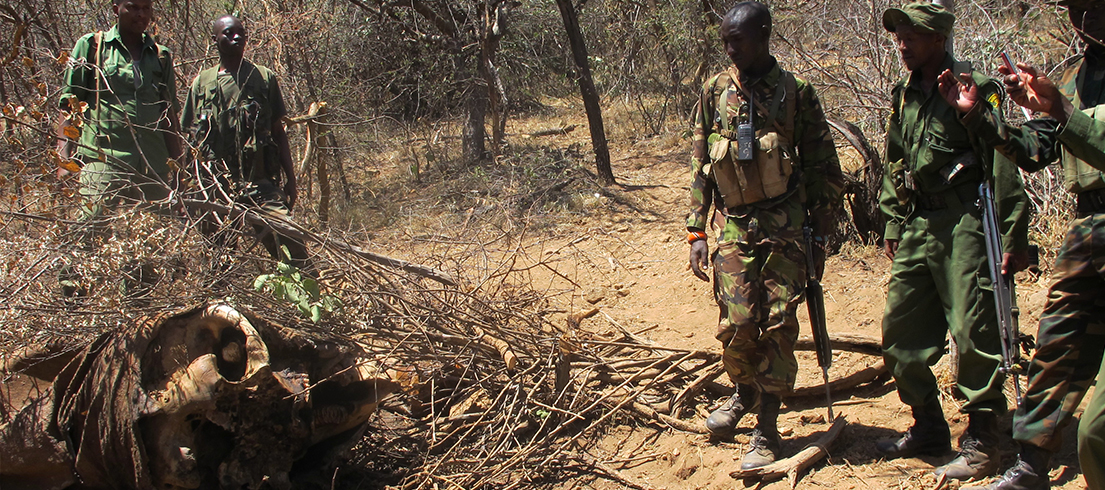 Elephant poaching rates virtually unchanged in 2014