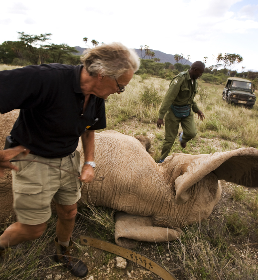 save the elephants, elephant, habitat loss, habitat, STE, wildlife conservation, wildlife, elephant tusks, Samburu National Reserve, Kenya, about, Iain Douglas-Hamilton, funding, funds, donations